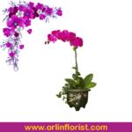 bunga anggrek jakarta